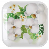 10 Assiettes Orchidée