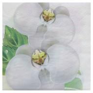 20 Serviettes Orchidée