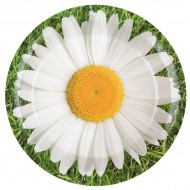 10 Assiettes Marguerite