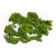 Mousse Verte